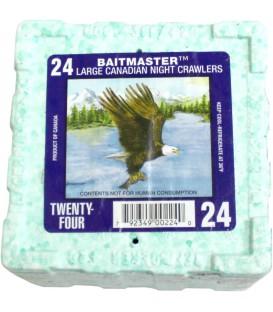 Lebendköder Tauwürmer 24 Stück