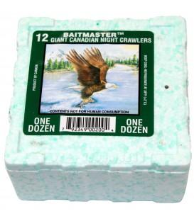 Kanadische Tauwürmer 12 Stück Styrobox